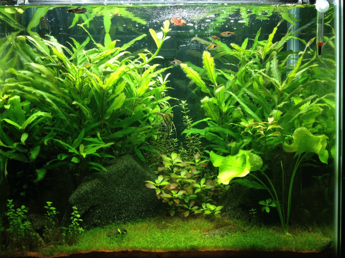 25 gallons planted tank (mostly live plants and fish) - This was my first set up in my 25 gallon from the beginning of 2014. I experimented with a type of red sand that can be found locally. Everything grew exceptionally well, however the sand was so nutrient rich that running a UV sterilizer with it was necessary.
