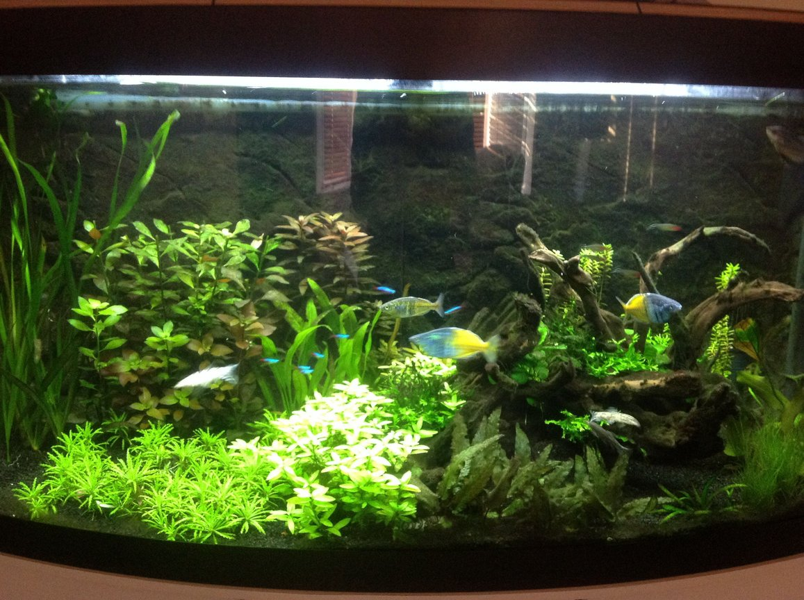 60 gallons planted tank (mostly live plants and fish) - Stu's planted 260L tank