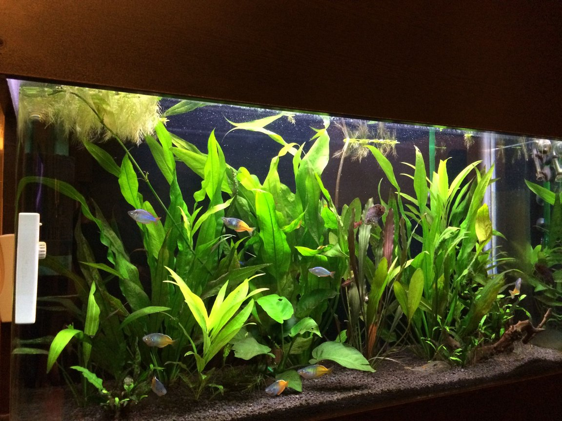 63 gallons planted tank (mostly live plants and fish) - tank