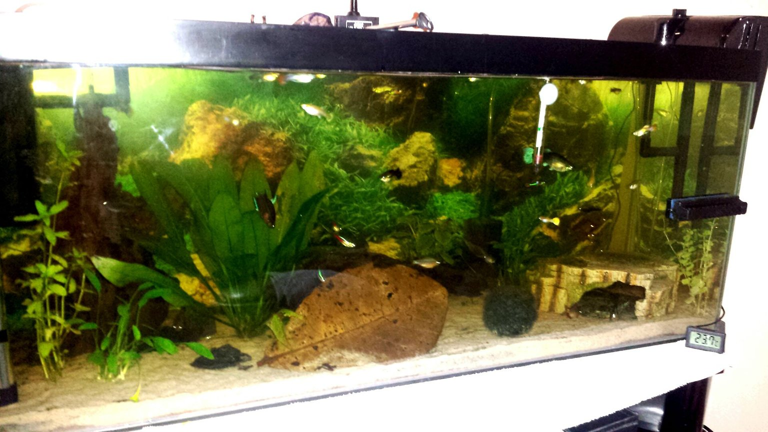 21 gallons planted tank (mostly live plants and fish) - 3ft all live plants