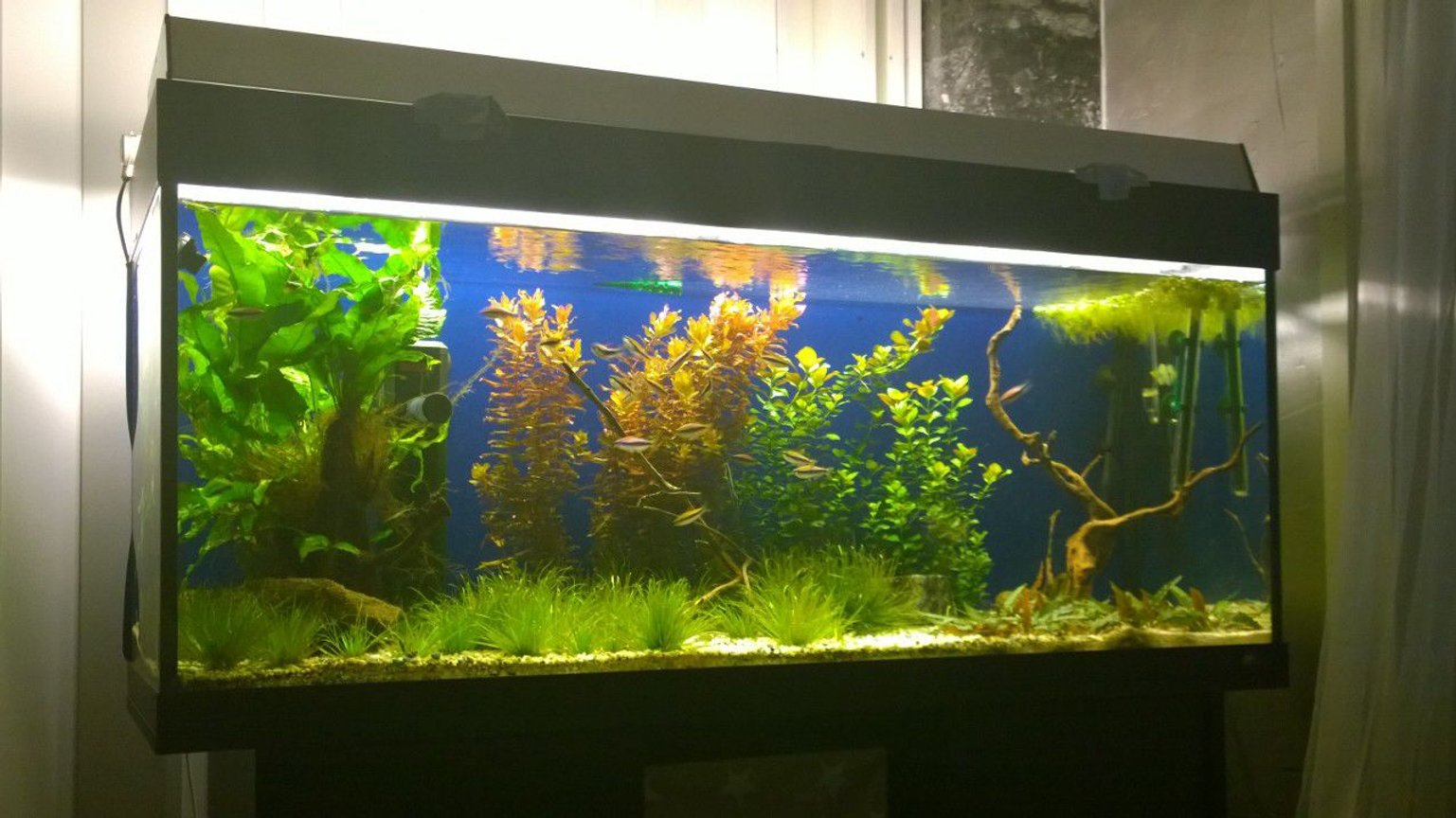 54 gallons planted tank (mostly live plants and fish) - Planted tank 54gallona/240ltr