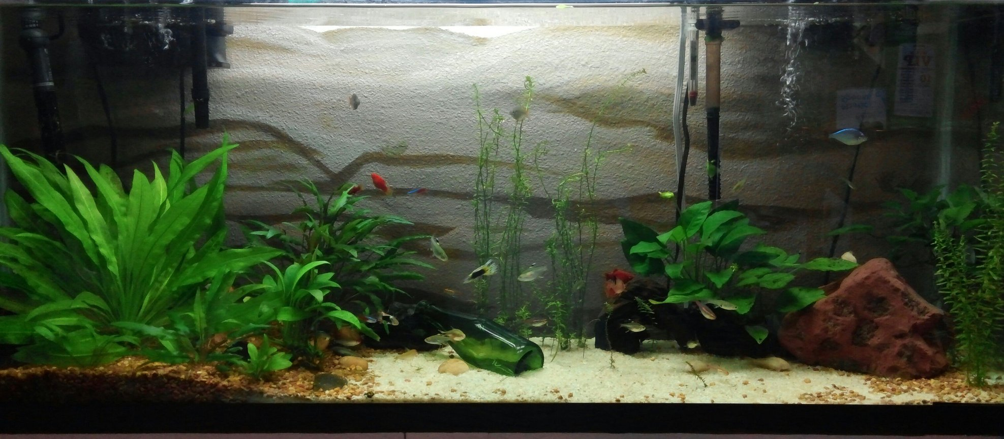 55 gallons planted tank (mostly live plants and fish) - personal aquarium