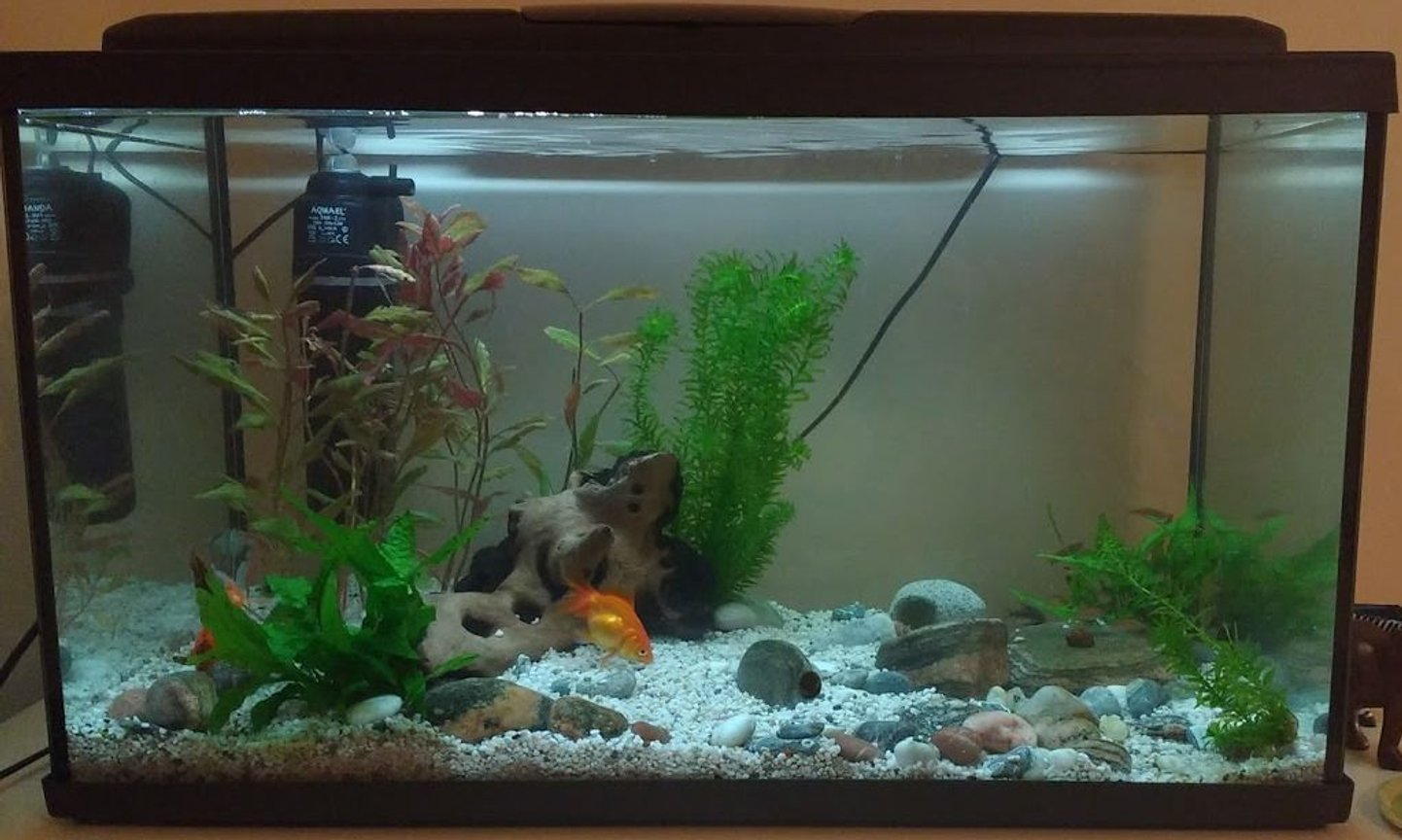 190 gallons planted tank (mostly live plants and fish) - 100 litre freshwater planted tank with bog wood, live plants and rocks. Current fish: Fancy Goldfish, hoplo catfish, glowlight danio, peppered corydora catfish, snails and shrimp. Thinking about adding a background and more plants, always keen to improve :)