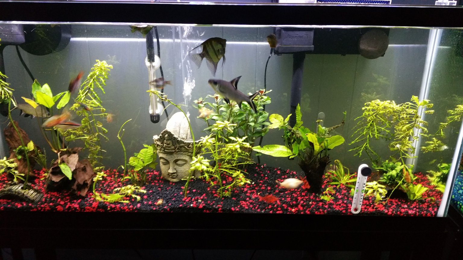 75 gallons planted tank (mostly live plants and fish) - 55 Gallon Semi Aggressive