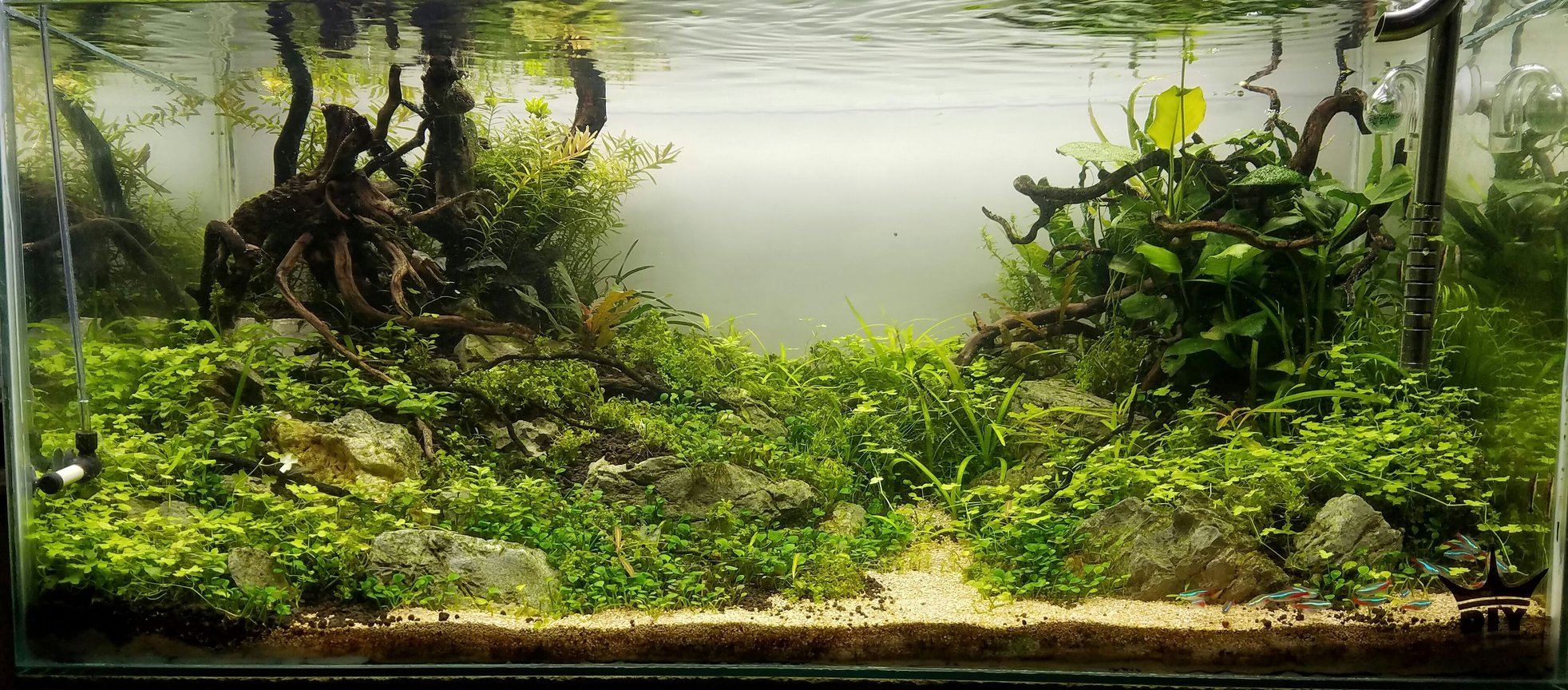 53 gallons planted tank (mostly live plants and fish) - 53gal
