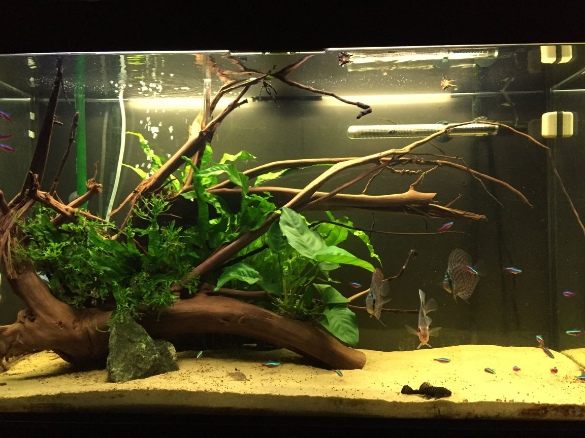 63 gallons planted tank (mostly live plants and fish) - Planted aquarium