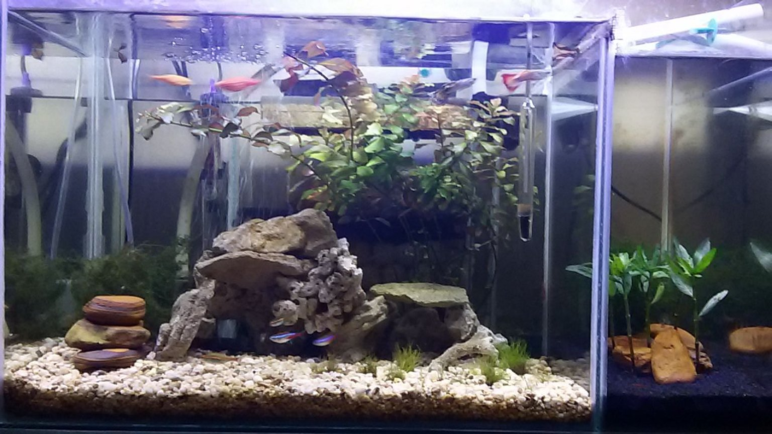 13 gallons planted tank (mostly live plants and fish) - Custom built nano tank & shrimp tank