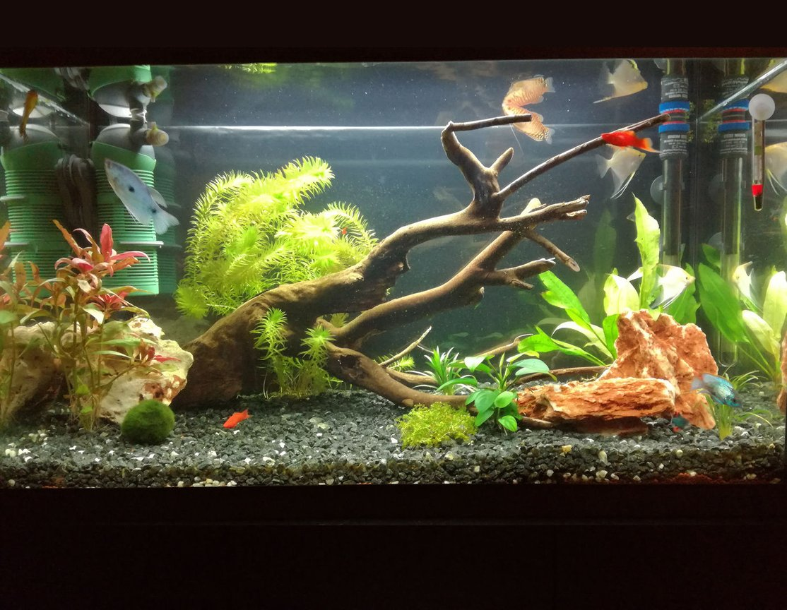 34 gallons planted tank (mostly live plants and fish) - My update of 34 gallon aquarium