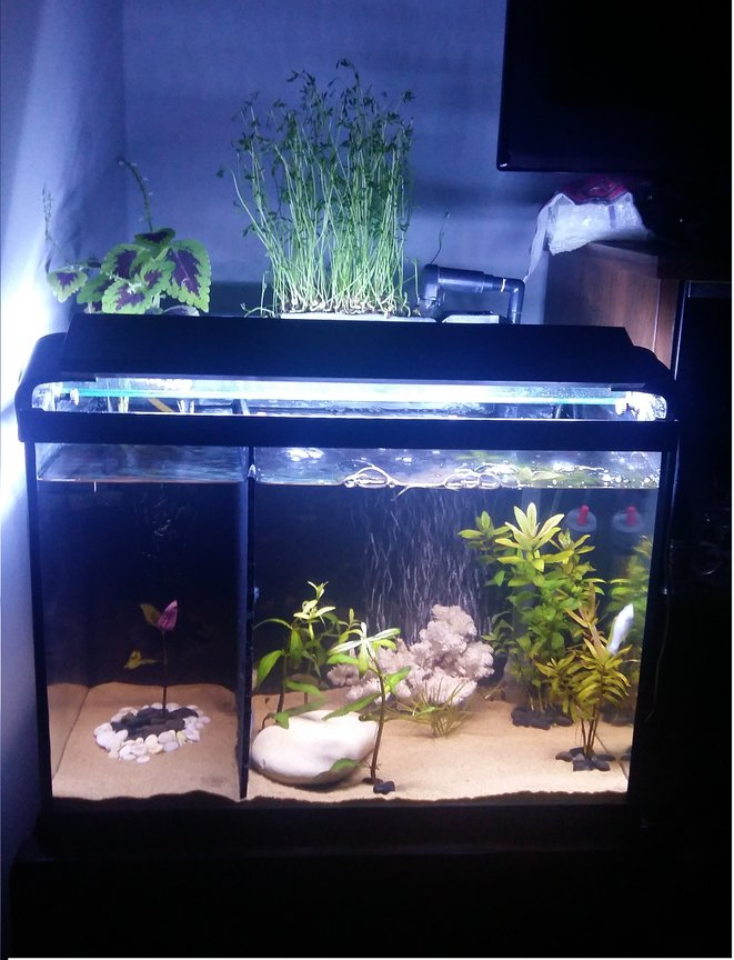 12 gallons planted tank (mostly live plants and fish) - 12 Gallons planted tank.