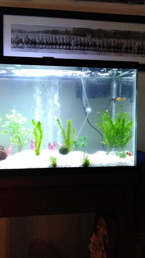 29 gallons planted tank (mostly live plants and fish) - First week; added more plants later.