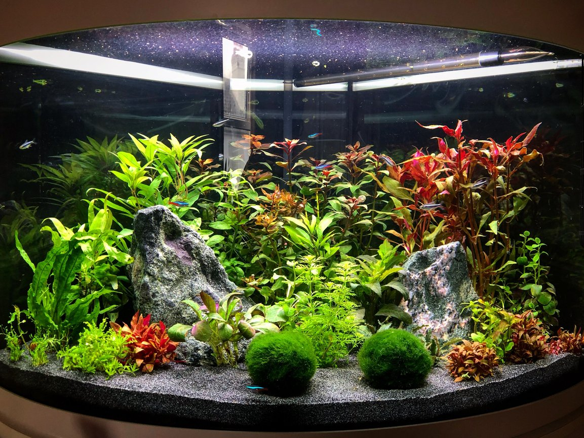 92 gallons planted tank (mostly live plants and fish) - 140l Tetra Planted corner Planted tankIwagumi/Ducth infulence