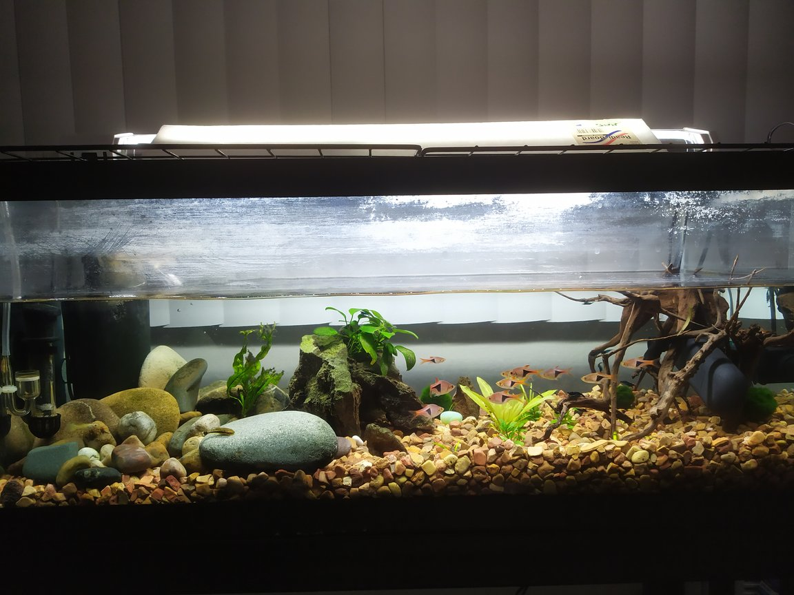 20 gallons planted tank (mostly live plants and fish) - New setup, add a UV filter and removed all of the old gravel and put in new ones. 11 Rasaboras, 2 Otos, bunch of blue shirmps, and one guppie ( my wifes only fish ) also have a DIY CO2 generator added.