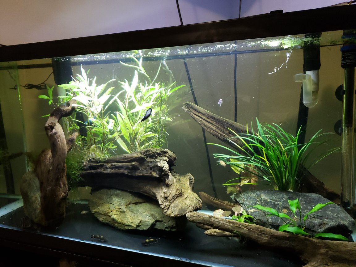 30 gallons planted tank (mostly live plants and fish) - Zen