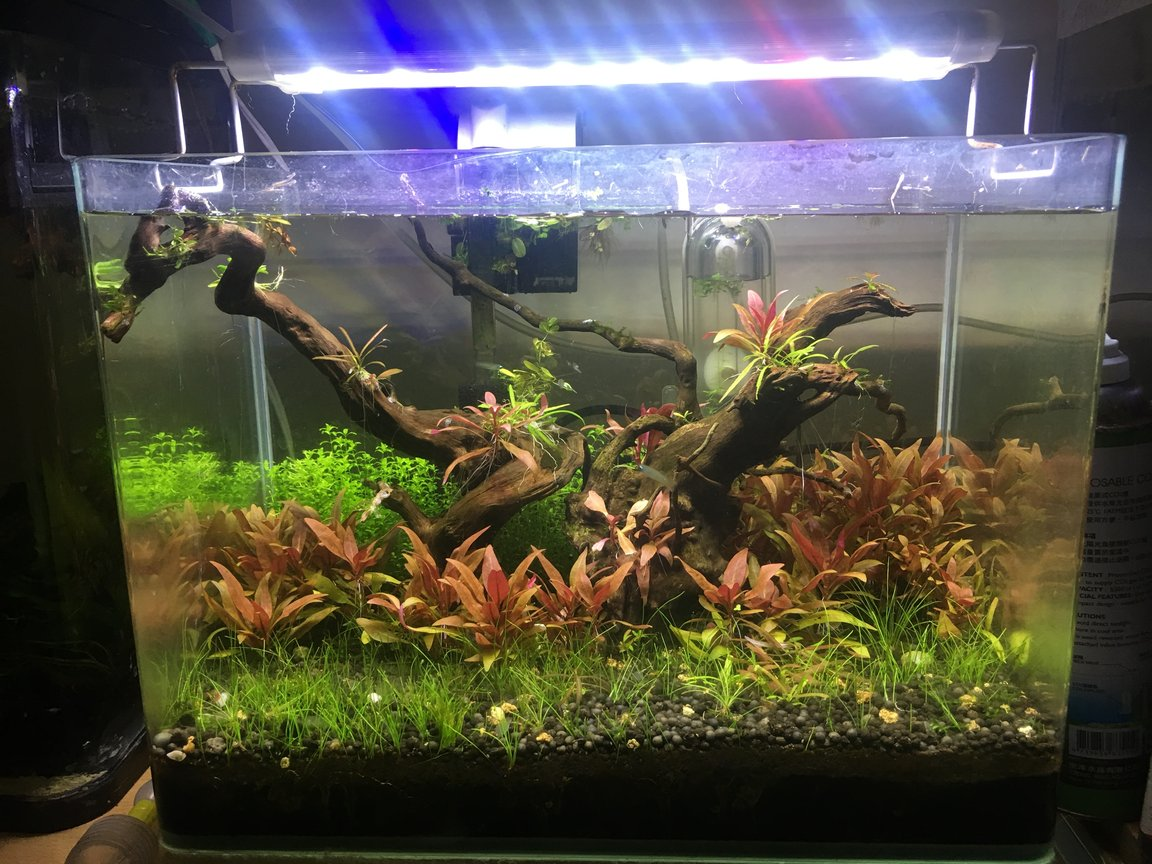 5 gallons planted tank (mostly live plants and fish) - green and red