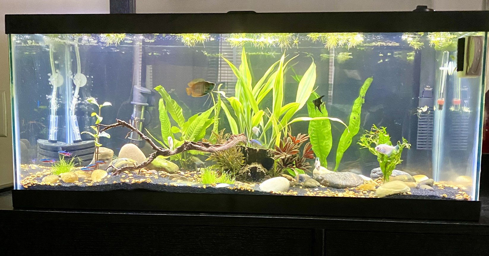20 gallons planted tank (mostly live plants and fish) - 20 gallon long planted tank