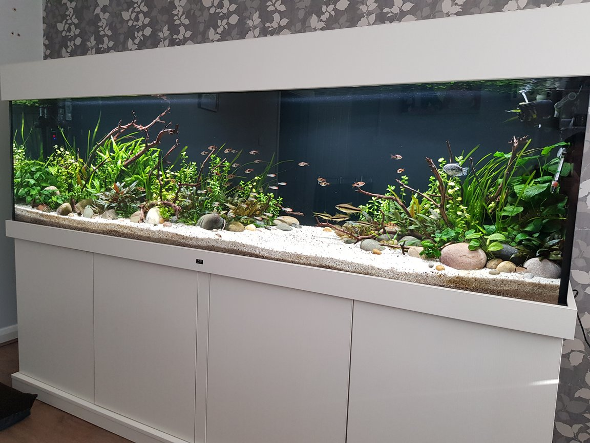 160 gallons planted tank (mostly live plants and fish) - 7 foot, 600 litre planted community aquarium with Optiwhite glass. Fx6 and fluval 407 filteration, 2 x fluval plant 3.0 46w lighting. Tropica substrate capped with pool filter sand, manzanita wood and river rock used for hardscape.