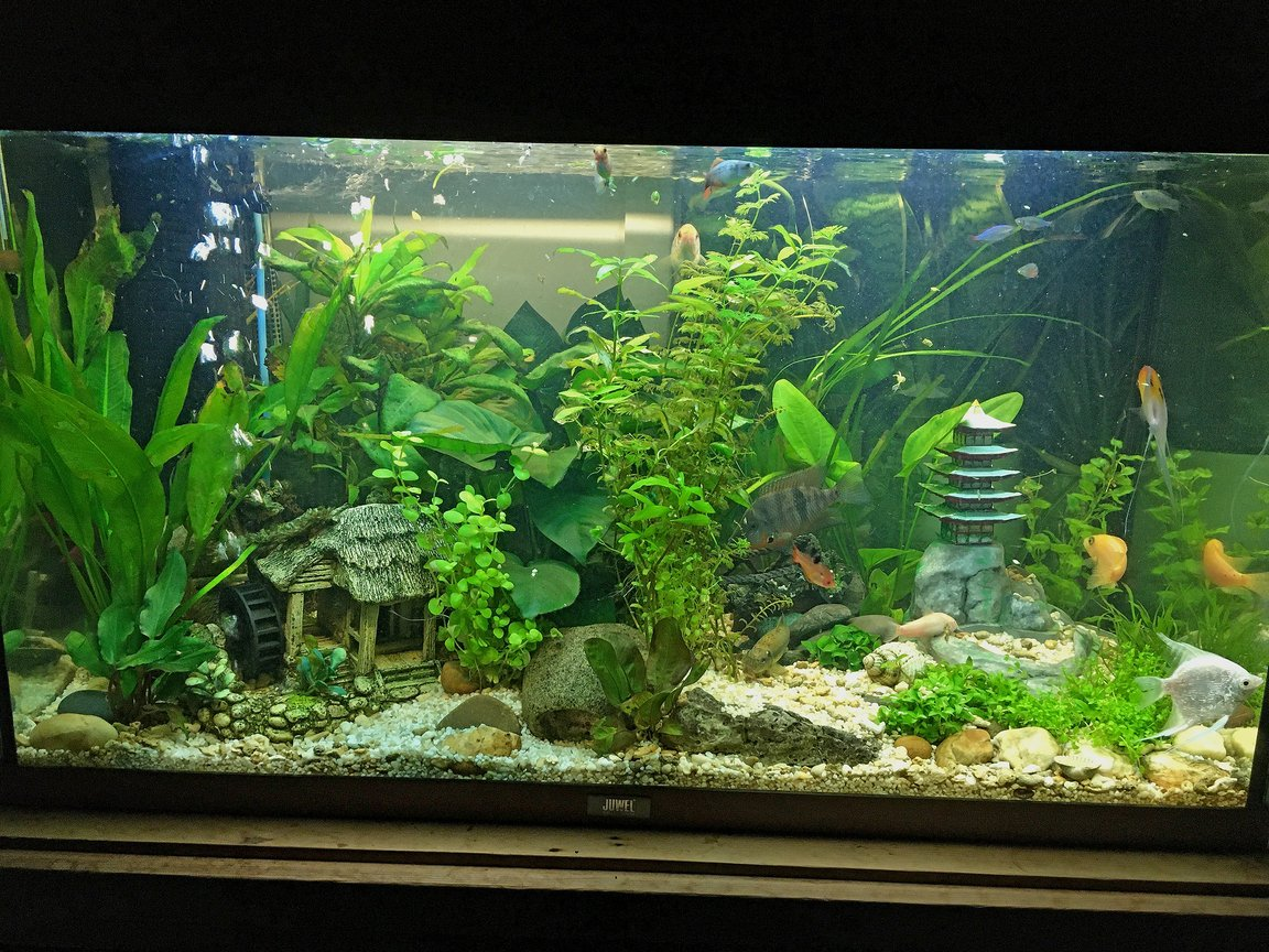 15 gallons planted tank (mostly live plants and fish) - 15 Gallon | 3D Printed & Hand Painted | Asian Themed Landscaping
