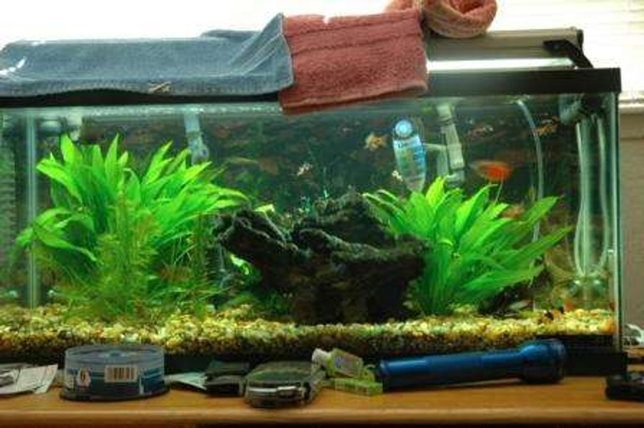 40 gallons planted tank (mostly live plants and fish) - lolz