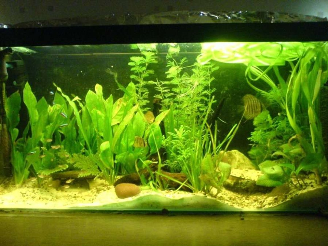 30 gallons planted tank (mostly live plants and fish) - 3ft planted tank with discua and assorted tetras