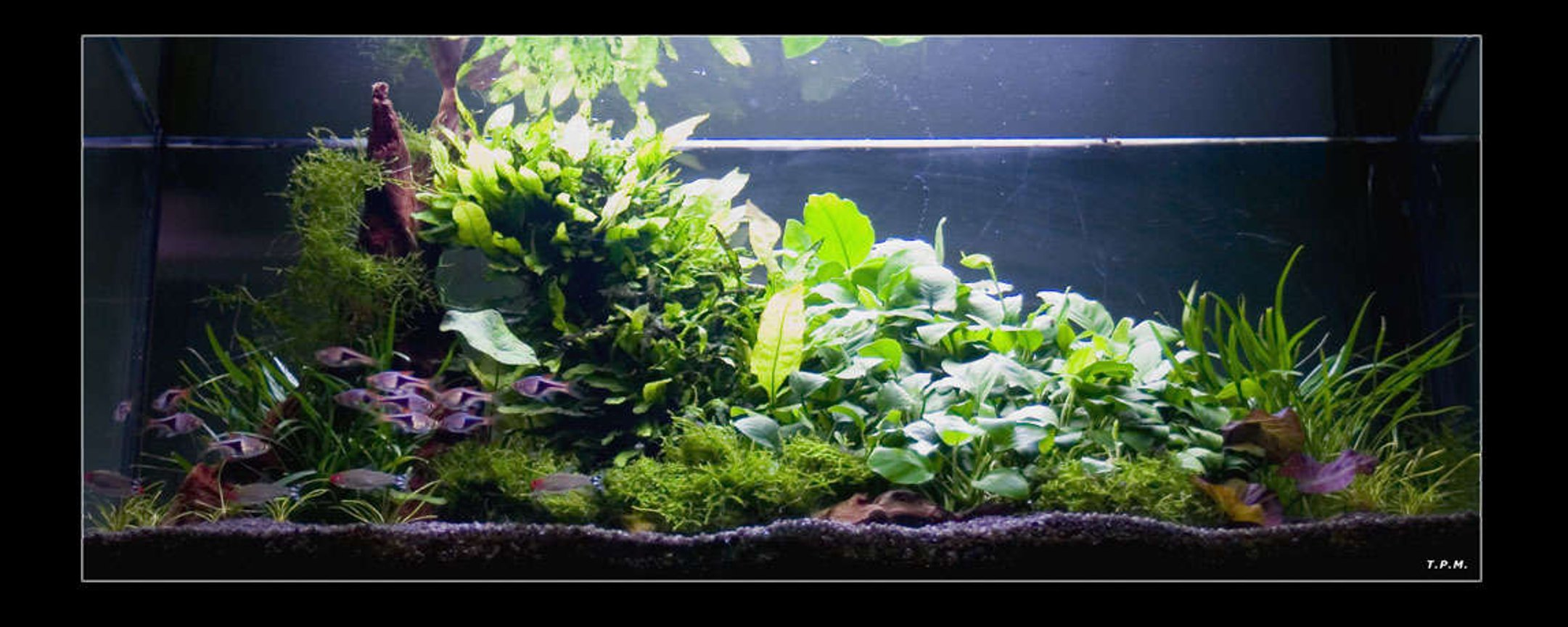 31 gallons planted tank (mostly live plants and fish) - some plants