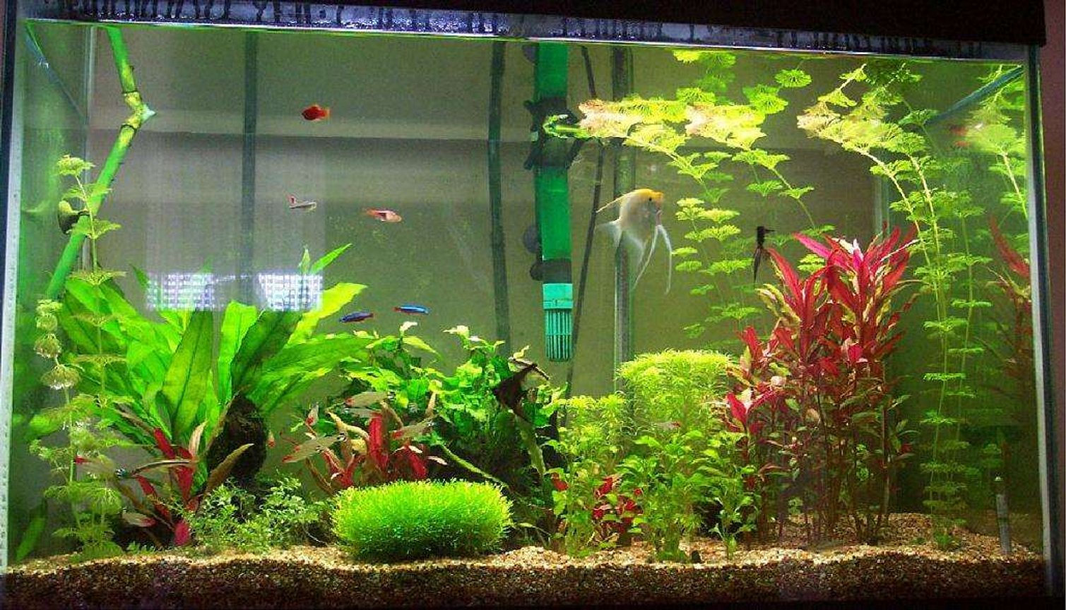 65 gallons planted tank (mostly live plants and fish) - 65 gal tank taken Dec 2005