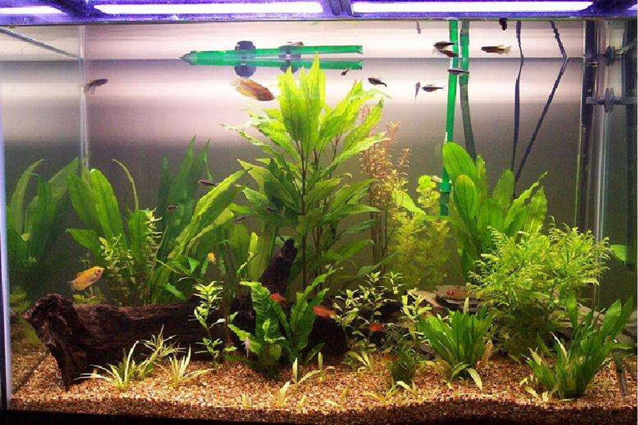 65 gallons planted tank (mostly live plants and fish) - 65 Gal tank.