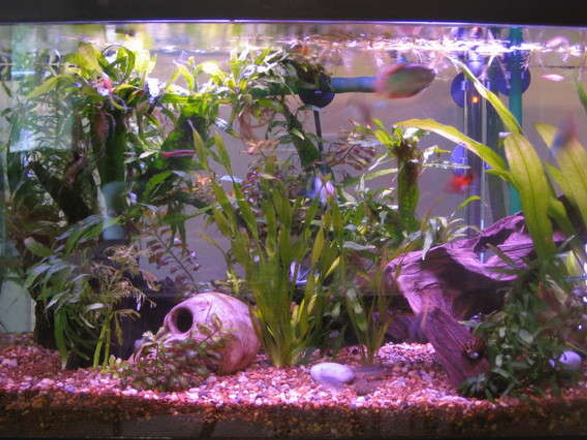 20 gallons planted tank (mostly live plants and fish) - 20gal planted 2years ago on initial set up