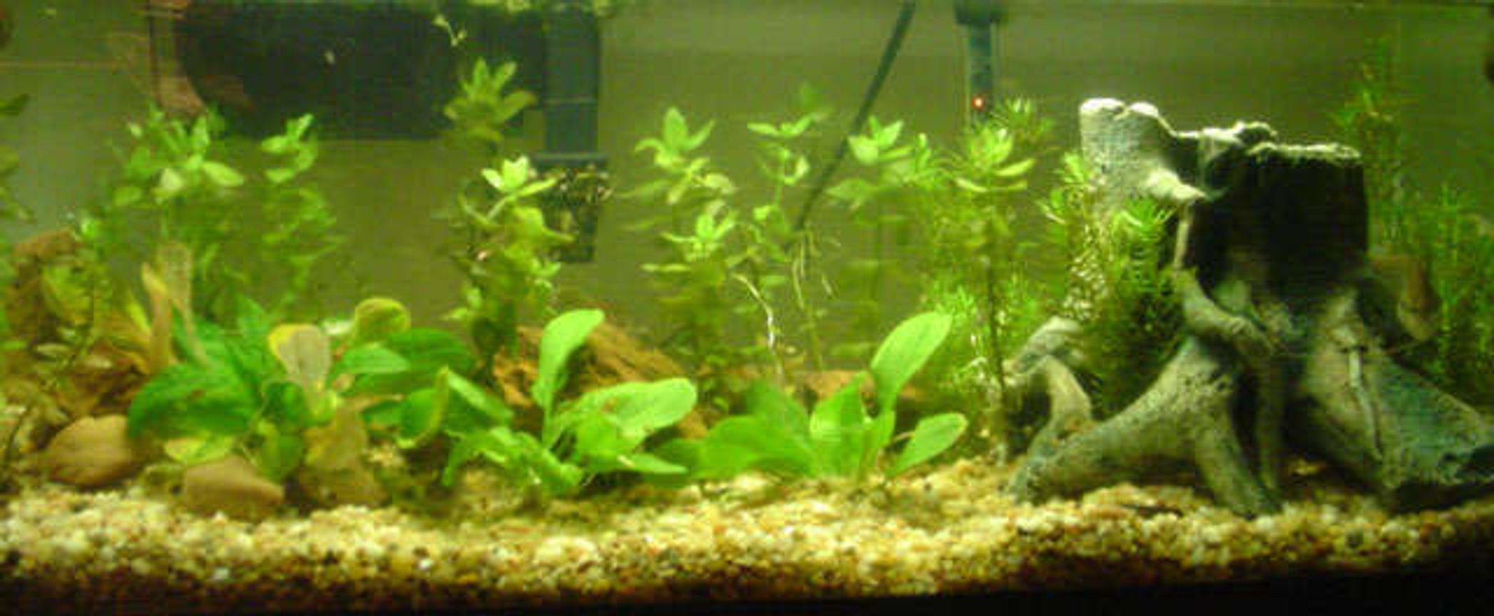 20 gallons planted tank (mostly live plants and fish) - 20 Gallon Long