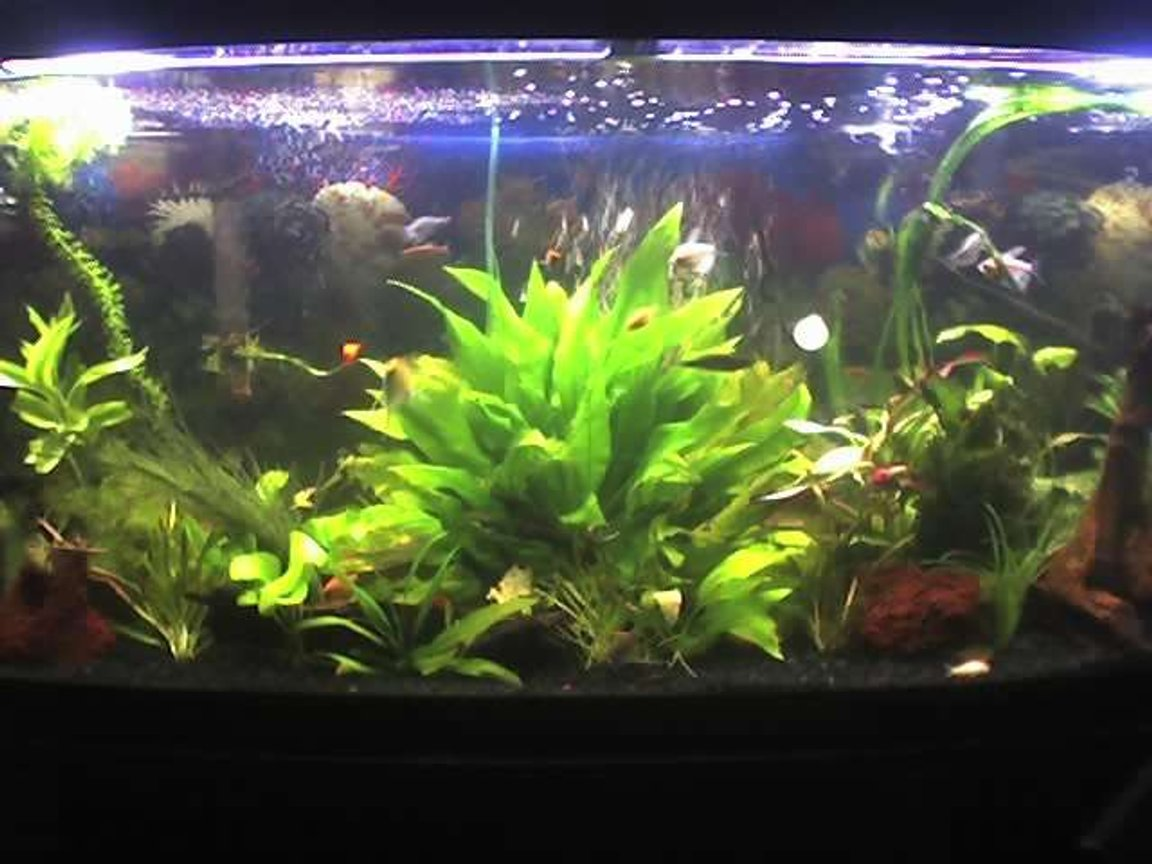 72 gallons planted tank (mostly live plants and fish) - Any suggestions?