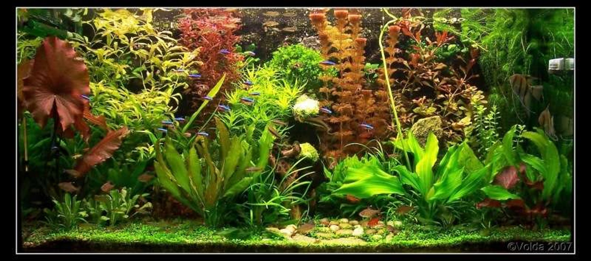 103 gallons planted tank (mostly live plants and fish) - My planted aquarium-465 liter- march 2007