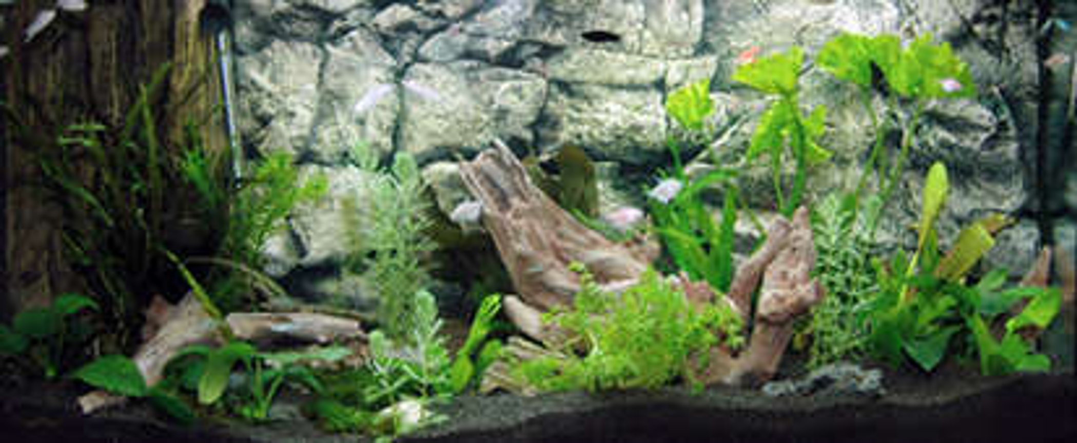 40 gallons planted tank (mostly live plants and fish) - We decorate the aquarium tank with our aquarium decorations
