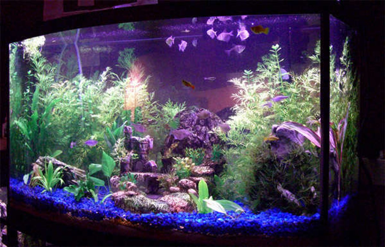46 gallons planted tank (mostly live plants and fish) - 46g Planted Tank