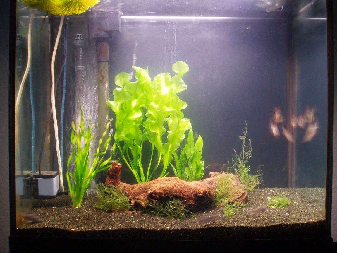 22 gallons planted tank (mostly live plants and fish) - New plants bought today.