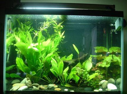 56 gallon fish tanks page 1 for 55 gallon fish tank size