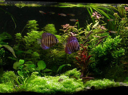 Rated #8: 100 Gallons Planted Tank - ssssss