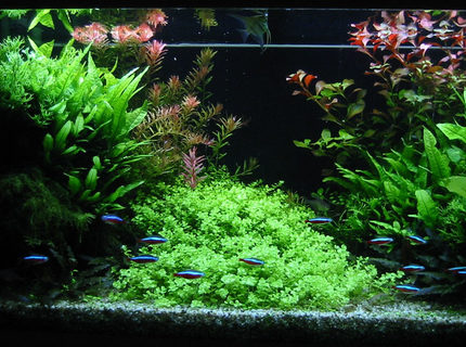 Rated #6: 47 Gallons Planted Tank - Front view of my 180 liters tank