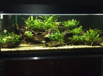 Rated #6: 80 Gallons Planted Tank - This is my current tank,