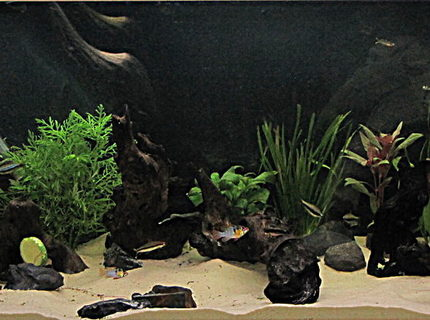50 gallons planted tank (mostly live plants and fish) - my first tank