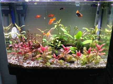 23 gallons planted tank (mostly live plants and fish) - Planted tank about 8 species of fish and plants been running about 5-6 months