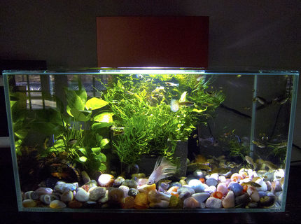 6 gallons planted tank (mostly live plants and fish) - Community in the Edge
