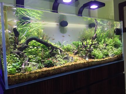 Rated #1: 60 Gallons Planted Tank - ADA 60 SIDE 1