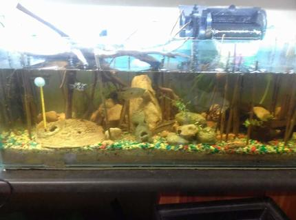 30 gallons planted tank (mostly live plants and fish) - 100L. Lightly planted with drift wood. Multiple filter types.