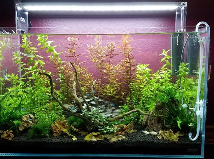 17 gallons planted tank (mostly live plants and fish) - Over ran by Beauty!