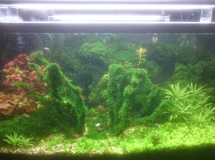 25 gallons planted tank (mostly live plants and fish) - shrimp tank