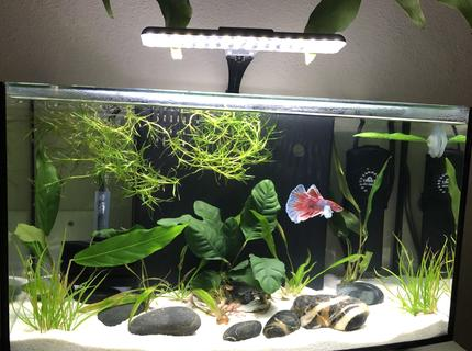 Rated #6: 60 Gallons Planted Tank - Pink Floyd