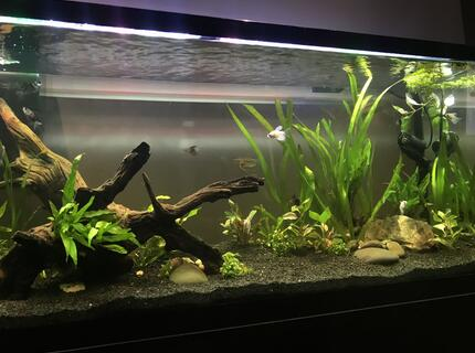 Rated #6: 55 Gallons Planted Tank - New 55 Gallon Planted Tank
