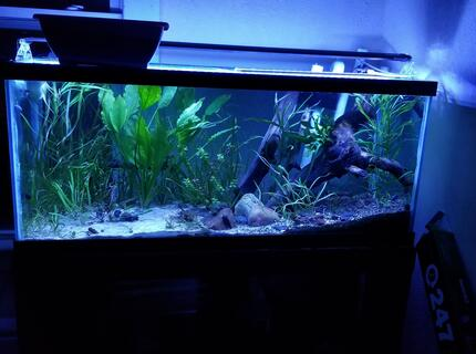 46 gallons planted tank (mostly live plants and fish) - My 75 gallon catfish aquarium