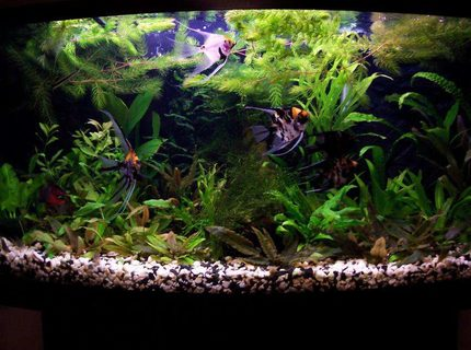 26 gallon fish tanks page 1 for First fish tank