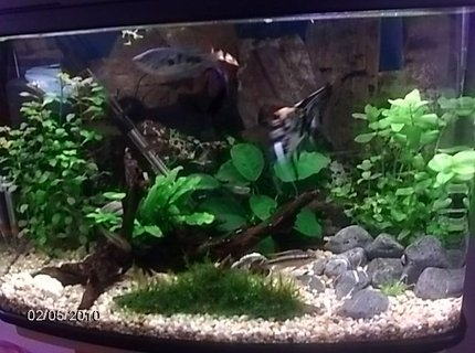 17 gallons planted tank (mostly live plants and fish) - .