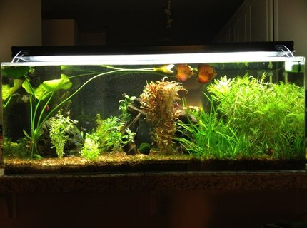"60 gallons planted tank (mostly live plants and fish) - 60gal (""Pass Through"")"